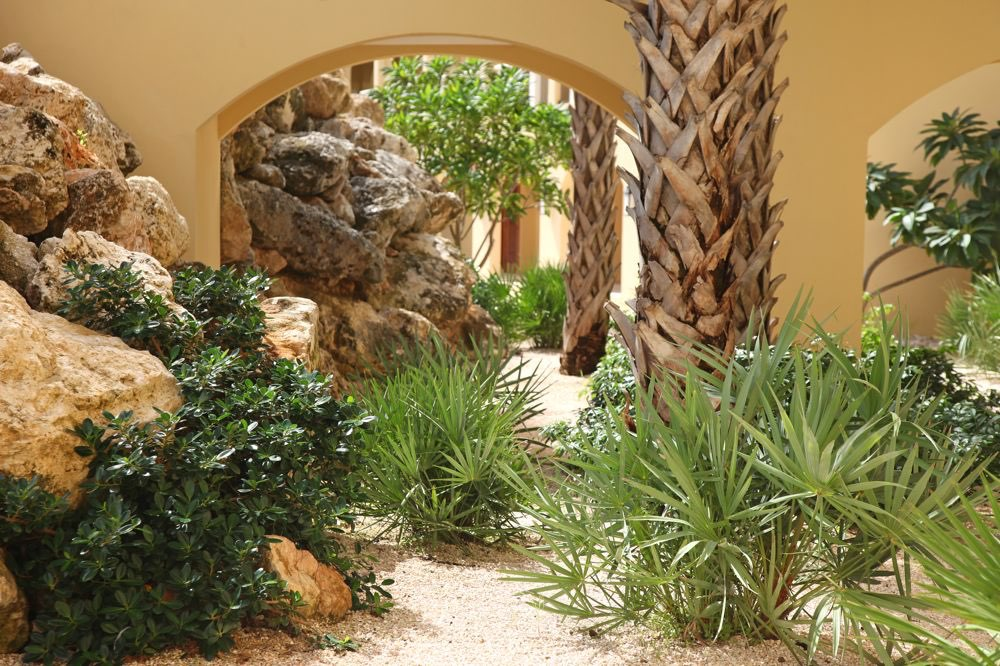 Peque o puente con piedras y palmeras for Palmeras para jardin